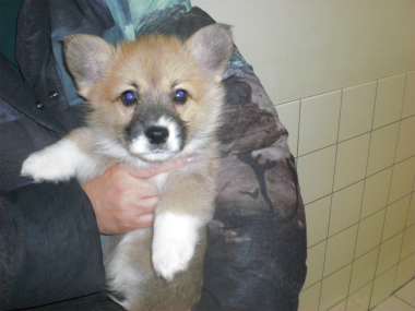 f:id:dog_life_saving:20130224085115j:image