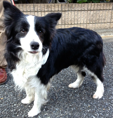f:id:dog_life_saving:20130224121742j:image