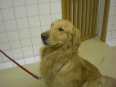 f:id:dog_life_saving:20130305210653j:image