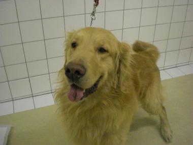 f:id:dog_life_saving:20130305210654j:image