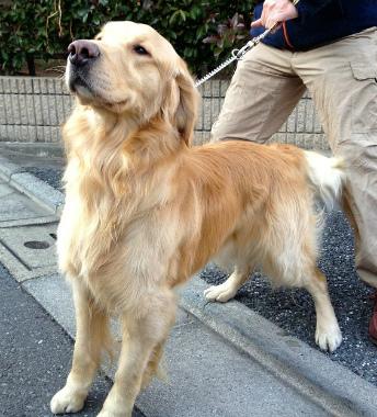 f:id:dog_life_saving:20130305210759j:image