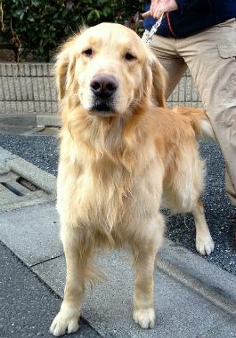 f:id:dog_life_saving:20130305210800j:image