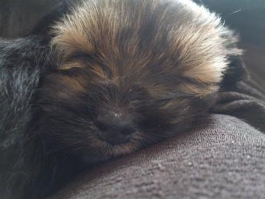 f:id:dog_life_saving:20130317204847j:image
