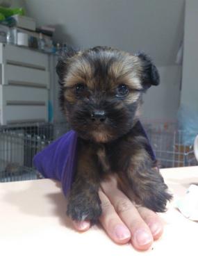 f:id:dog_life_saving:20130317204849j:image