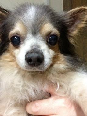 f:id:dog_life_saving:20130317211233j:image