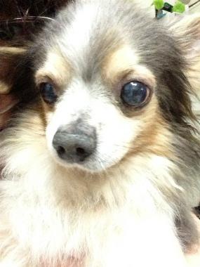 f:id:dog_life_saving:20130317211234j:image
