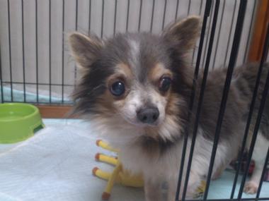 f:id:dog_life_saving:20130317211235j:image