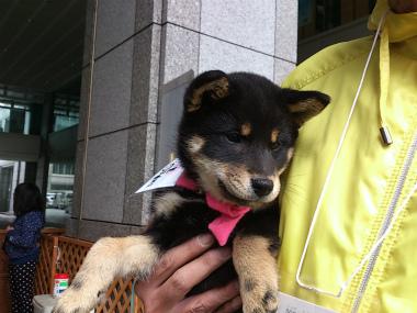 f:id:dog_life_saving:20130414104153j:image