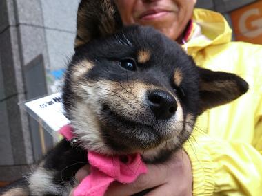 f:id:dog_life_saving:20130414104154j:image