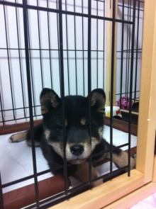 f:id:dog_life_saving:20130414104156j:image
