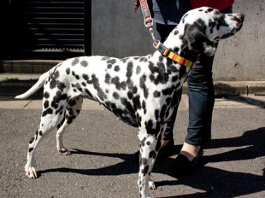 f:id:dog_life_saving:20130421205226j:image