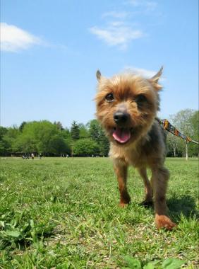 f:id:dog_life_saving:20130517230718j:image