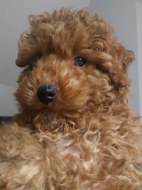 f:id:dog_life_saving:20130517234311j:image
