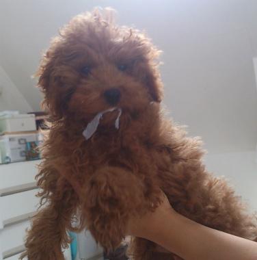 f:id:dog_life_saving:20130517234312j:image