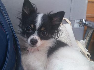 f:id:dog_life_saving:20130517235158j:image