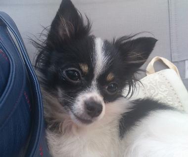 f:id:dog_life_saving:20130517235200j:image