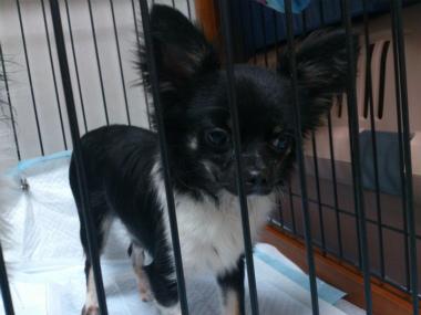 f:id:dog_life_saving:20130518064410j:image