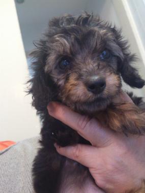 f:id:dog_life_saving:20130518065634j:image