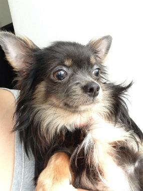 f:id:dog_life_saving:20130608211922j:image