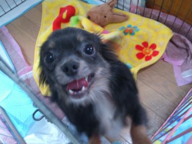 f:id:dog_life_saving:20130608211924j:image