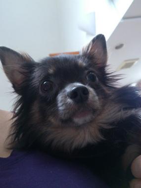 f:id:dog_life_saving:20130608211925j:image