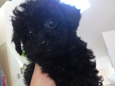 f:id:dog_life_saving:20130614042505j:image