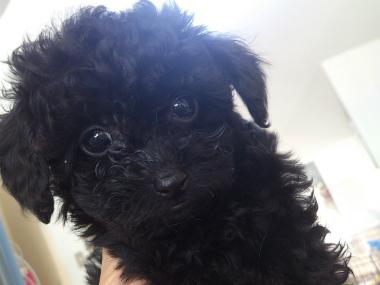 f:id:dog_life_saving:20130614042506j:image