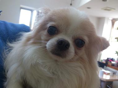 f:id:dog_life_saving:20130614043525j:image