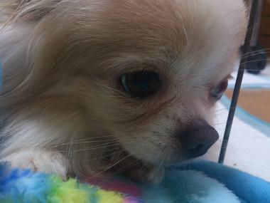 f:id:dog_life_saving:20130614043526j:image