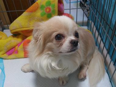 f:id:dog_life_saving:20130614043527j:image