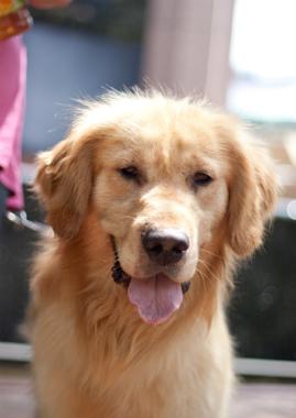 f:id:dog_life_saving:20130614063300j:image