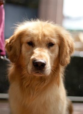 f:id:dog_life_saving:20130614063301j:image