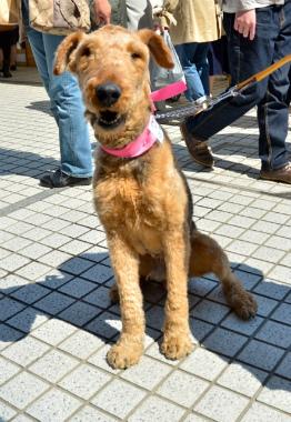 f:id:dog_life_saving:20130614064049j:image