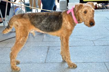 f:id:dog_life_saving:20130614064051j:image