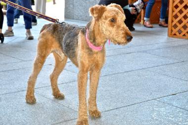 f:id:dog_life_saving:20130614064052j:image