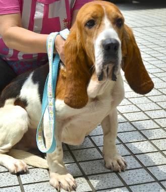 f:id:dog_life_saving:20130709213546j:image