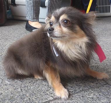 f:id:dog_life_saving:20130709231559j:image