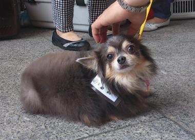 f:id:dog_life_saving:20130709231600j:image