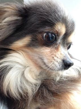 f:id:dog_life_saving:20130709231601j:image