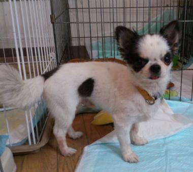 f:id:dog_life_saving:20130709233105j:image