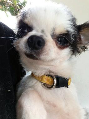 f:id:dog_life_saving:20130709233108j:image