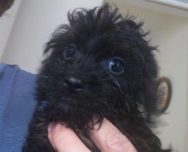 f:id:dog_life_saving:20130713195642j:image