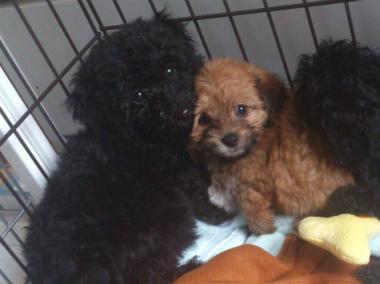 f:id:dog_life_saving:20130713200335j:image