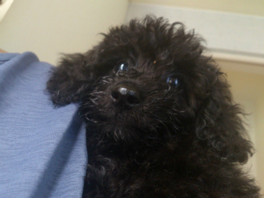 f:id:dog_life_saving:20130713200338j:image