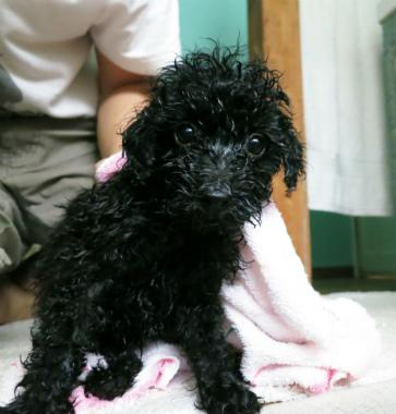f:id:dog_life_saving:20130713201033j:image
