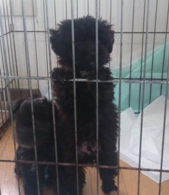 f:id:dog_life_saving:20130713201716j:image