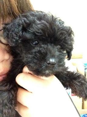 f:id:dog_life_saving:20130713201926j:image
