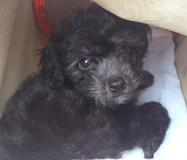 f:id:dog_life_saving:20130713202708j:image