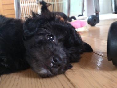 f:id:dog_life_saving:20130713202709j:image