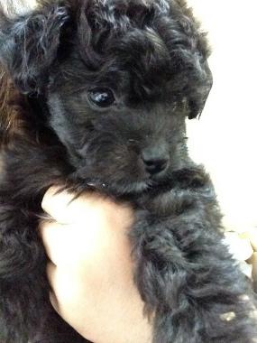 f:id:dog_life_saving:20130713202711j:image